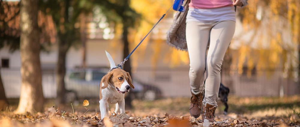 Dog Owners More Likely to Meet Fitness Benchmarks